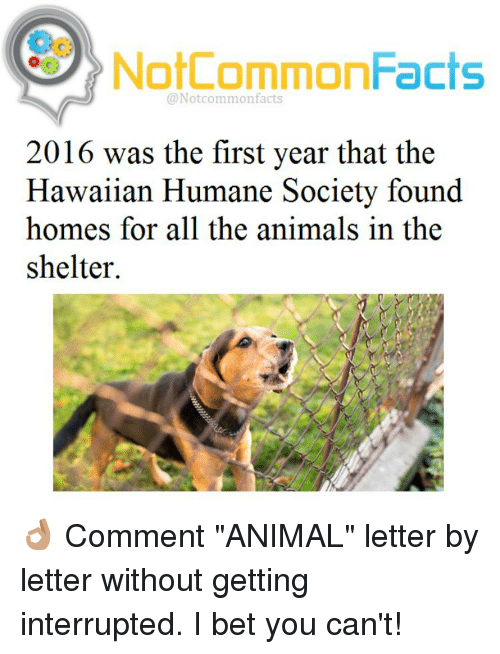 "I Bet, Memes, and Humane Society: Not CommonFacts  @Notcommon facts  2016 was the first year that the  Hawaiian Humane Society found  homes for all the animals in the  shelter. 👌🏽 Comment ""ANIMAL"" letter by letter without getting interrupted. I bet you can't!"