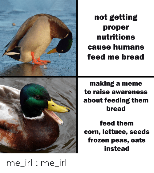 feeding: not getting  proper  nutritions  cause humans  feed me bread  making a meme  to raise awareness  about feeding them  bread  feed them  corn, lettuce, seeds  frozen peas, oats  instead  @der.leong me_irl : me_irl