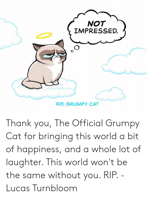 Official Grumpy: NOT  IMPRESSED.  CASTURNBLOOM  RIP, GRUMPY CAT Thank you, The Official Grumpy Cat for bringing this world a bit of happiness, and a whole lot of laughter. This world won't be the same without you. RIP. - Lucas Turnbloom