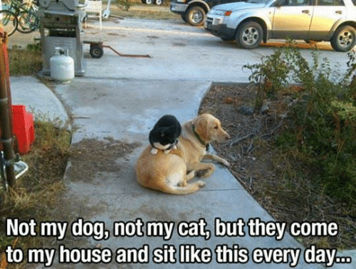 Dank, My House, and House: Not my dog, not my cat, but they come  to my house and Sit like t