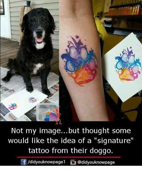 "Memes, Image, and Tattoo: Not my image... but thought some  would like the idea of a signature""  tattoo from their doggo.  /didyouknowpagel@didyouknowpage"