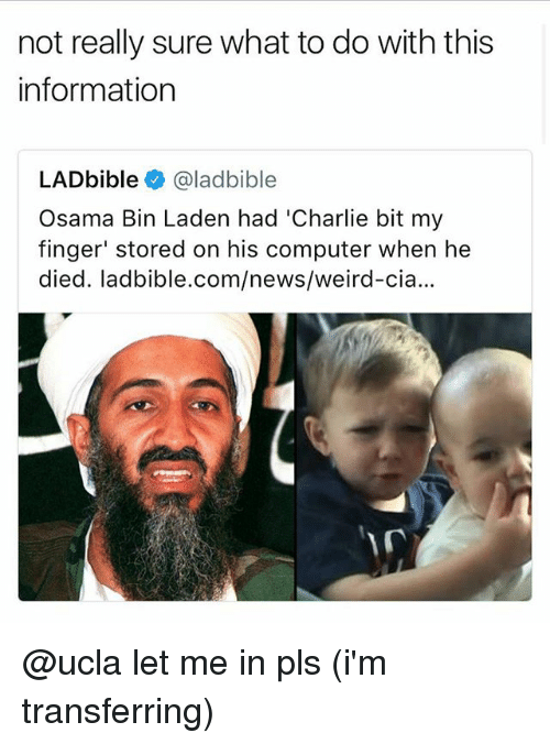 Charlie, News, and Osama Bin Laden: not really sure what to do with this  information  LADbible @ladbible  Osama Bin Laden had 'Charlie bit my  finger' stored on his computer when he  died. ladbible.com/news/weird-cia... @ucla let me in pls (i'm transferring)