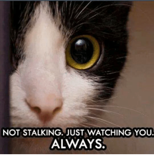 not-stalking-just-watching-you-always-39