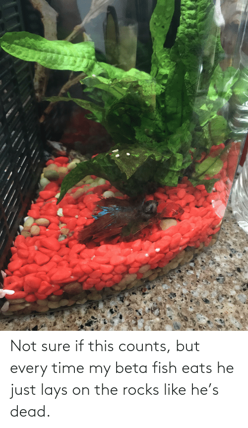 Lay's: Not sure if this counts, but every time my beta fish eats he just lays on the rocks like he's dead.
