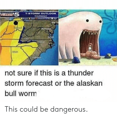 Forecast, Alaskan Bull Worm, and Worm: not sure if this is a thunder  storm forecast or the alaskan  bull worm This could be dangerous.