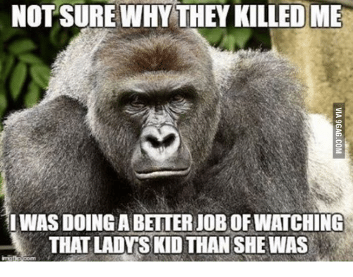 🐣 25+ Best Memes About Cincinnati Zoo Gorilla Child
