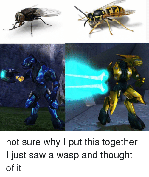 Memes, Saw, and Thought: not sure why I put this together. I just saw a wasp and thought of it