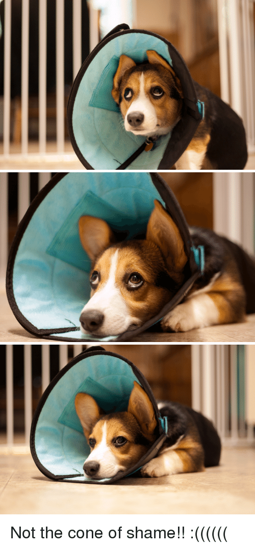 Shame, Cone of Shame, and Cone: Not the cone of shame!! :((((((