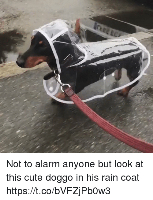 Cute, Alarm, and Rain: Not to alarm anyone but look at this  cute doggo in his rain coat https://t.co/bVFZjPb0w3