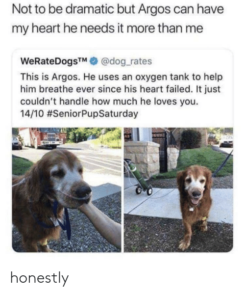 Dog Rates: Not to be dramatic but Argos can have  my heart he needs it more than me  WeRateDogsTM@dog rates  This is Argos. He uses an oxygen tank to help  him breathe ever since his heart failed. It just  couldn't handle how much he loves you.  14/10 honestly