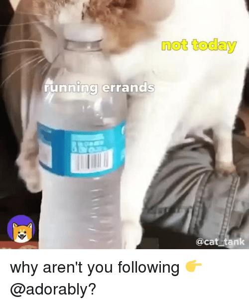 Today, Relatable, and Running: not today  running errands  @cat tank why aren't you following 👉 @adorably?