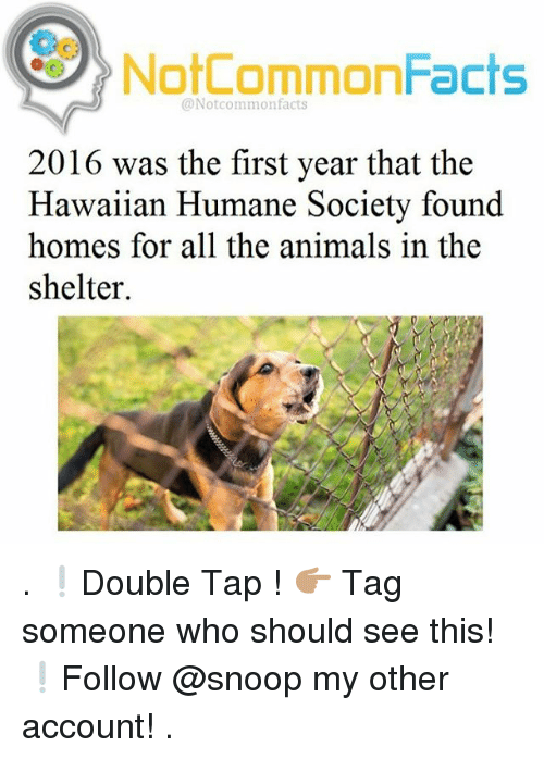 Animals, Memes, and Snoop: NotCommonFacts  @Notcommonfacts  2016 was the first year that the  Hawaiian Humane Society found  homes for all the animals in the  shelter. . ❕Double Tap ! 👉🏽 Tag someone who should see this! ❕Follow @snoop my other account! .
