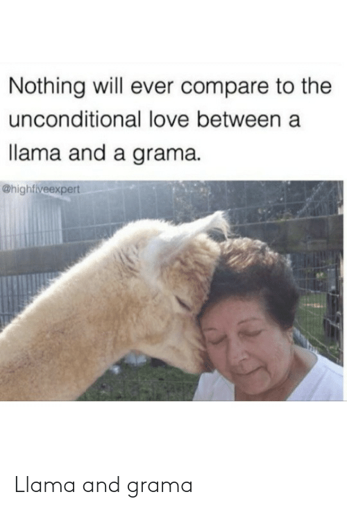 llama: Nothing will ever compare to the  unconditional love between a  llama and a grama.  @highfiveexpert Llama and grama