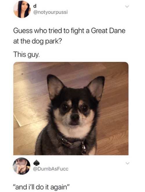"""Dog Park: @notyourpussi  Guess who tried to fight a Great Dane  at the dog park?  This guy.  @DumbAsFucc  """"and i'll do it again"""""""