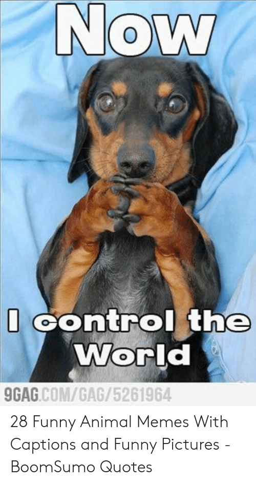 funny animal memes: Now  Control the  World  GAG.COM/GAG/5261964 28 Funny Animal Memes With Captions and Funny Pictures - BoomSumo Quotes
