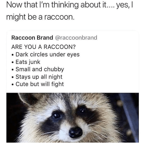 dark circles: Now that I'm thinking about it... yes, l  might be a raccoon.  Raccoon Brand @raccoonbrand  ARE YOU A RACCOON?  . Dark circles under eyes  Eats junk  Small and chubby  .Stays up all night  Cute but will fight