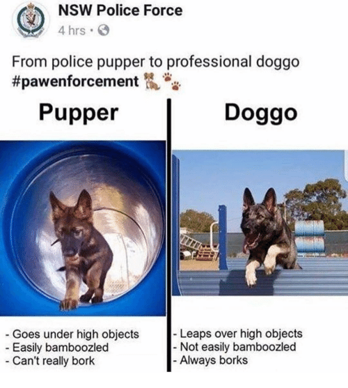Memes, Police, and 🤖: NSW Police Force  4 hrs  From police pupper to professional doggo  #pawenforcement侃.  Pupper  Doggo  Leaps over high objects  Goes under high objects  Easily bamboozled  - Not easily bamboozled  - Can't really bork  Always borks