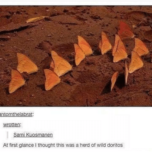 Wild, Humans of Tumblr, and Thought: ntomthelabrat:  wrotten:  Sami Kuosmanen  At first glance I thought this was a herd of wild doritos