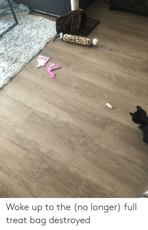 Pure, Full, and Treat: ntT  PURE Woke up to the (no longer) full treat bag destroyed