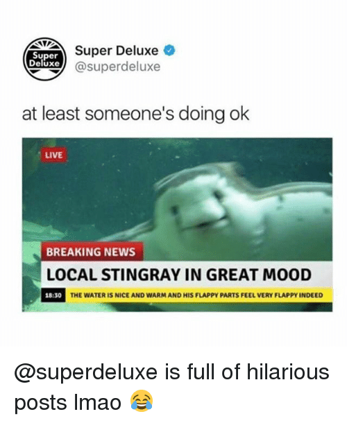 Nicee: NTTSuper Deluxe  Super  Deluxe@superdeluxe  at least someone's doing ok  LIVE  BREAKING NEWS  LOCAL STINGRAY IN GREAT MOOD  18:30  THE WATER IS NICE AND WARM AND HIS FLAPPY PARTS FEEL VERY FLAPPY INDEED @superdeluxe is full of hilarious posts lmao 😂