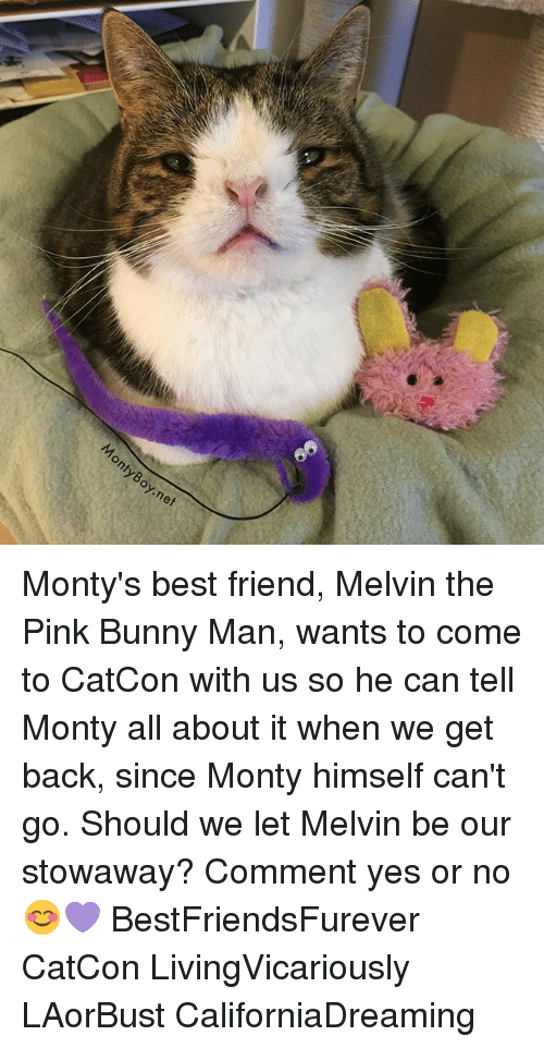 Best Friend, Memes, and Best: nty  Boy.nef Monty's best friend, Melvin the Pink Bunny Man, wants to come to CatCon with us so he can tell Monty all about it when we get back, since Monty himself can't go. Should we let Melvin be our stowaway? Comment yes or no 😊💜 BestFriendsFurever CatCon LivingVicariously LAorBust CaliforniaDreaming