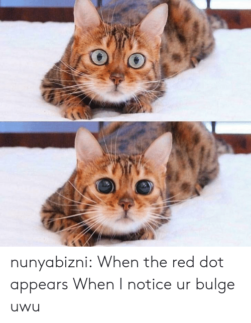 The Red: nunyabizni: When the red dot appears  When I notice ur bulge uwu