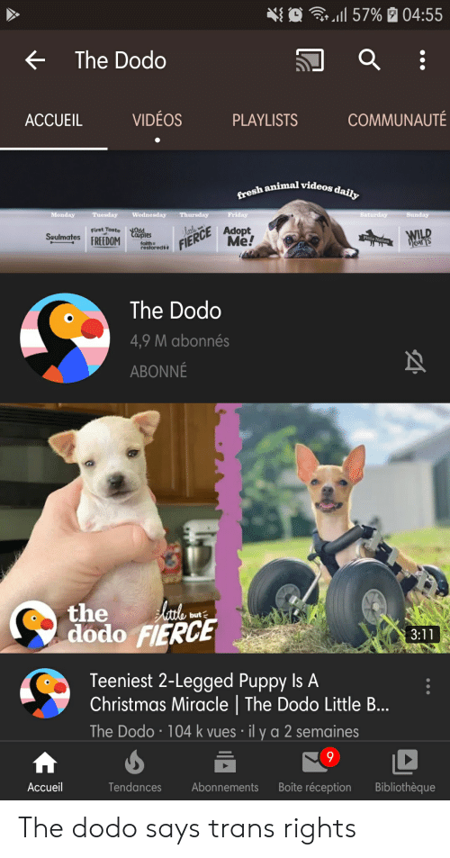 Animal Videos: O 57% 04:55  The Dodo  VIDÉOS  COMMUNAUTE  PLAYLISTS  ACCUEIL  fresh animal videos daily  Monday  Saturday  Wednesday  Thursday  Friday  Tuesday  Sunday  Adopt  Me!  First Taste  WILD  iear ts  atte  Cauples  faith  restoreds  PPOT  Saulmates  Pittie Nation  FREEDOM  FIERCE  The Dodo  4,9 M abonnés  ABONNÉ  Jarde  the  but  dodo FIERCE  3:11  Teeniest 2-Legged Puppy Is A  Christmas Miracle The Dodo Little B...  The Dodo 104 k vues il y a 2 semaines  Boite réception  Tendances  Bibliothèque  Abonnements  Аccueil The dodo says trans rights
