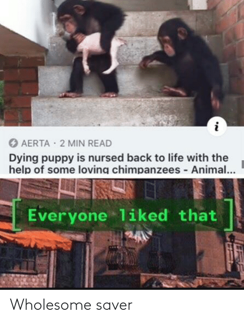 min: O AERTA 2 MIN READ  Dying puppy is nursed back to life with the  help of some loving chimpanzees - Animal...  Everyone liked that Wholesome saver