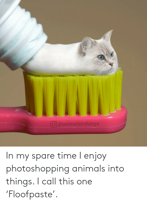 In My: O@animalsinthings In my spare time I enjoy photoshopping animals into things. I call this one 'Floofpaste'.