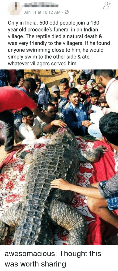 crocodiles: O+  Jan 11 at 10:12 AM S  Only in India. 500 odd people join a 130  year old crocodile's funeral in an Indian  village. The reptile died a natural death &  was very friendly to the villagers. If he found  anyone swimming close to him, he would  simply swim to the other side & ate  whatever villagers served him. awesomacious:  Thought this was worth sharing