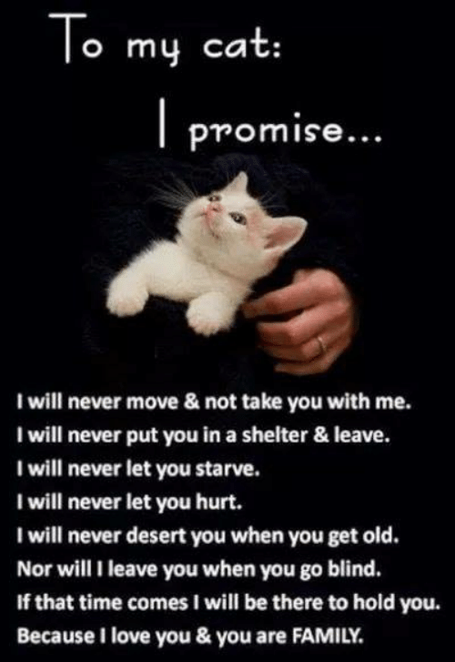 Family, Love, and Memes: o mu cat:  promise...  I will never move & not take you with me.  I will never put you in a shelter & leave.  I will never let you starve.  I will never let you hurt.  I will never desert you when you get old.  Nor will I leave you when you go blind.  If that time comes I will be there to hold you.  Because I love you & you are FAMILY.