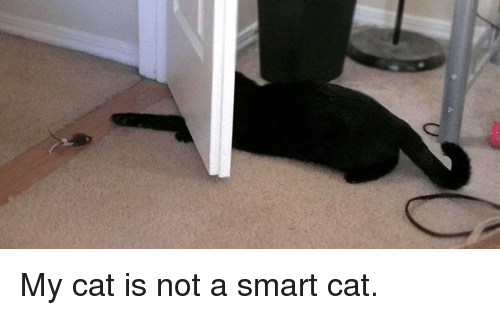 Smart Cat: O My cat is not a smart cat.