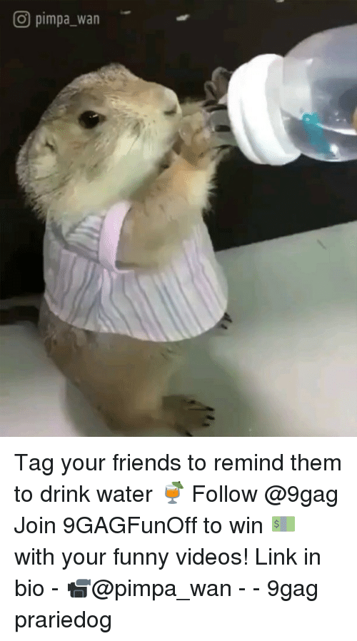 your funny: O pimpa_wan Tag your friends to remind them to drink water 🍹 Follow @9gag Join 9GAGFunOff to win 💵 with your funny videos! Link in bio - 📹@pimpa_wan - - 9gag prariedog