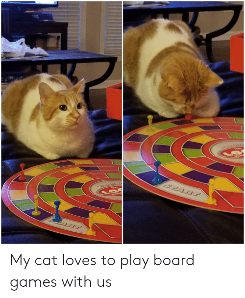 Games, Board, and Board Games: OAB  THE  BOAR My cat loves to play board games with us