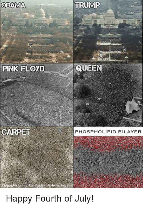 Pink Floyd: OBAMA  TRUMP  PINK FLOYD  QUEEN  CARPET  PHOSPHOLIPID BILAYER Happy Fourth of July!