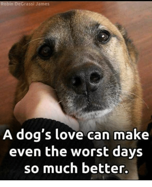 Dogs, Love, and Memes: obin DeGrassi James  A dog's love can make  even the worst days  so much better.