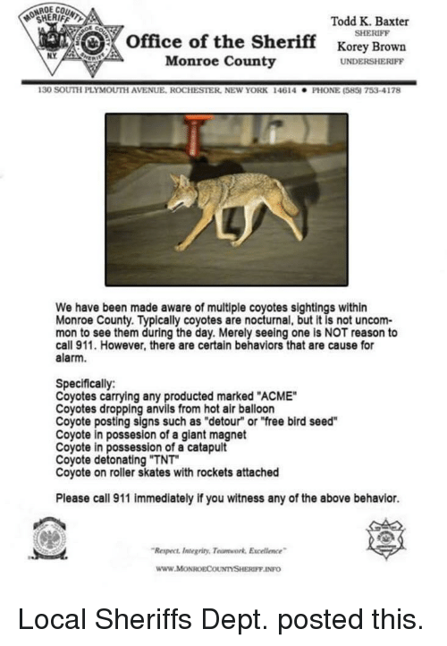 """nocturnal: OCHERIFFL  Todd K. Baxter  SHERIFF  office of the Sherifforey Brown  NY  Monroe County  UNDERSHERIFF  130 SOUTH PLYMOUTİ AVENUE. ROCHESTER, NEw YORK  146 14  . PHONE (585) 753-4178  We have been made aware of multiple coyotes sightings within  Monroe County. Typically coyotes are nocturnal, but it is not uncom-  mon to see them during the day. Merely seeing one is NOT reason to  call 911. However, there are certain behaviors that are cause for  alarm.  Specifically:  Coyotes carrying any producted marked """"ACME""""  Coyotes dropping anvils from hot air balloon  Coyote posting signs such as """"detour"""" or """"free bird seed""""  Coyote in possesion of a giant magnet  Coyote in possession of a catapult  Coyote detonating """"TNT  Coyote on roller skates with rockets attached  Please call 911 immediately if you witness any of the above behavior.  Respect ntegriny, Teumwork Excelence  www.MoONROECOUNTYSHERIFF INFO Local Sheriffs Dept. posted this."""