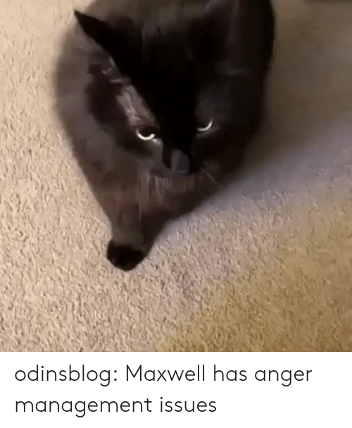 maxwell: odinsblog:   Maxwell has anger management issues