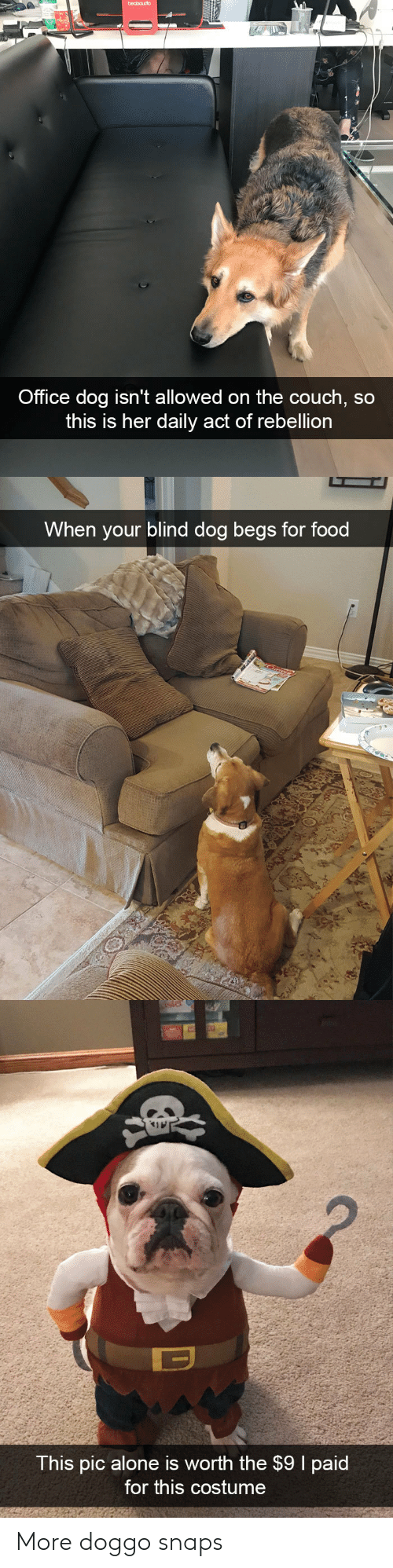 Being Alone, Food, and Couch: Office dog isn't allowed on the couch, so  this is her dally act of rebellion   When your blind dog begs for food   This pic alone is worth the $9 I paid  for this costume More doggo snaps
