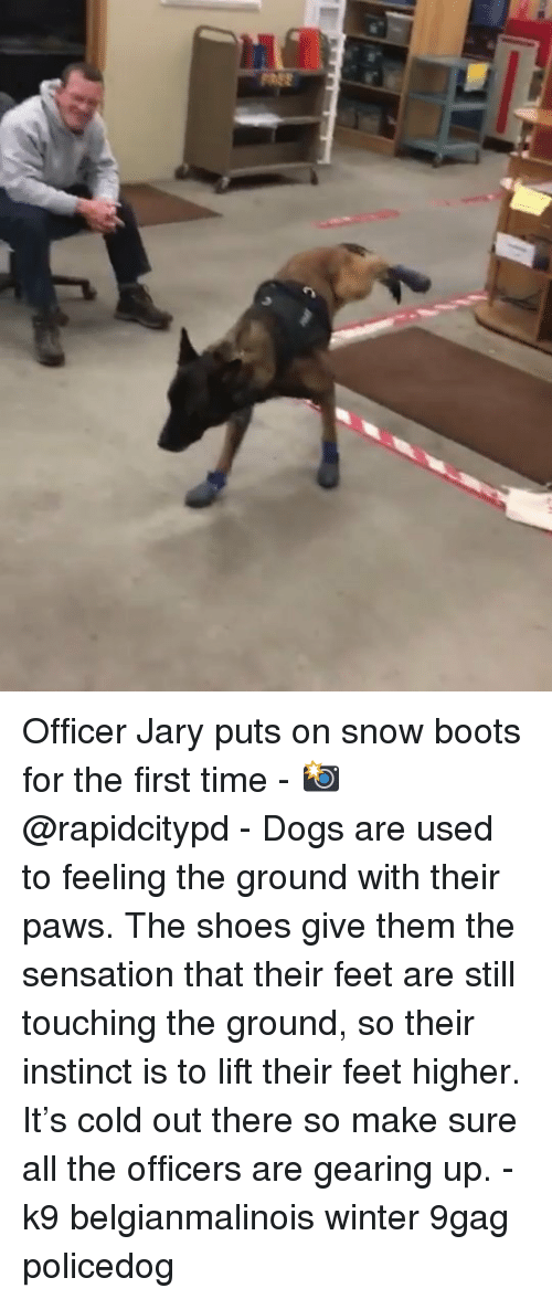 sensation: Officer Jary puts on snow boots for the first time - 📸@rapidcitypd - Dogs are used to feeling the ground with their paws. The shoes give them the sensation that their feet are still touching the ground, so their instinct is to lift their feet higher. It's cold out there so make sure all the officers are gearing up. - k9 belgianmalinois winter 9gag policedog