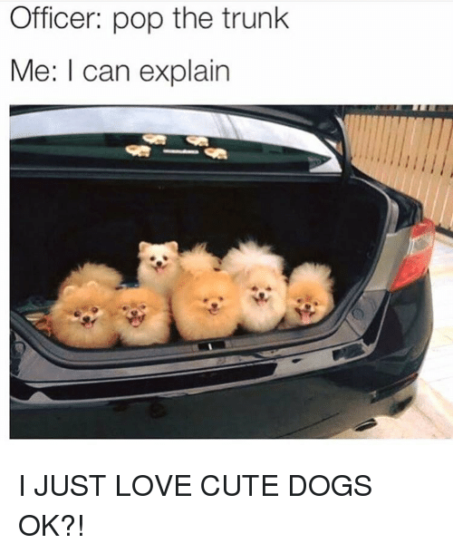 cute dogs: Officer: pop the trunk  Me: I can explain I JUST LOVE CUTE DOGS OK?!