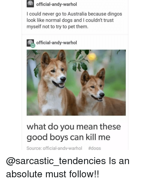 tendencies: official-andy-warhol  I could never go to Australia because dingos  look like normal dogs and I couldn't trust  myself not to try to pet them.  official-andy-warhol  what do you mean these  good boys can kill me  Source: Official-andy-warhol  @sarcastic_tendencies Is an absolute must follow!!