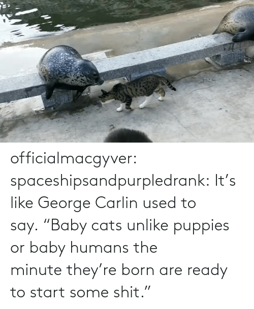 "George Carlin: officialmacgyver:  spaceshipsandpurpledrank:  It's like George Carlin used to say. ""Baby cats unlike puppies or baby humans the minute they're born are ready to start some shit."""