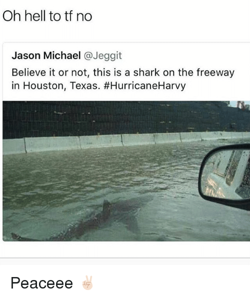 Shark, Houston, and Michael: Oh hell to tf no  Jason Michael @Jeggit  Believe it or not, this is a shark on the freeway  in Houston, Texas. Peaceee ✌🏻
