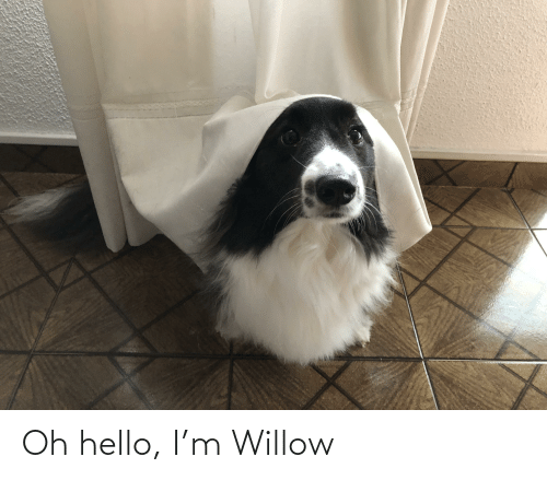 willow: Oh hello, I'm Willow