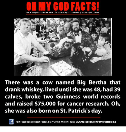 cancer research: OH MY GOD FACTS!  www.omg facts online.com  I fb.com/omg facts online oh my god-facts  g There was a cow named Big Bertha that  drank whiskey, lived until she was 48, had 39  calves, broke two Guinness world records  and raised $75,000 for cancer research. Oh,  she was also born on St. Patrick's day.  Join Facebook's Biggest Facts Library with6Million+ Fans- www.facebook.com/omgfactsonline