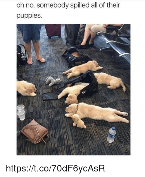 Memes, Puppies, and 🤖: oh no, somebody spilled all of their  puppies https://t.co/70dF6ycAsR