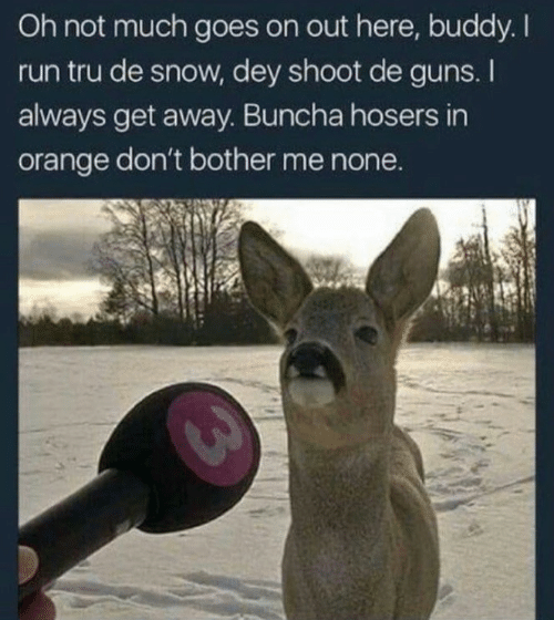 Guns, Run, and Orange: Oh not much goes on out here, buddy. I  run tru de snow, dey shoot de guns. I  always get away. Buncha hosers in  orange don't bother me none.