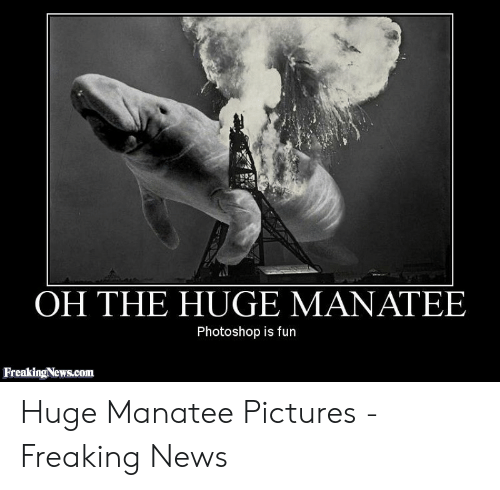 38fd15dc0 News, Photoshop, and Pictures: OH THE HUGE MANATEE Photoshop is fun  FreakingNews.