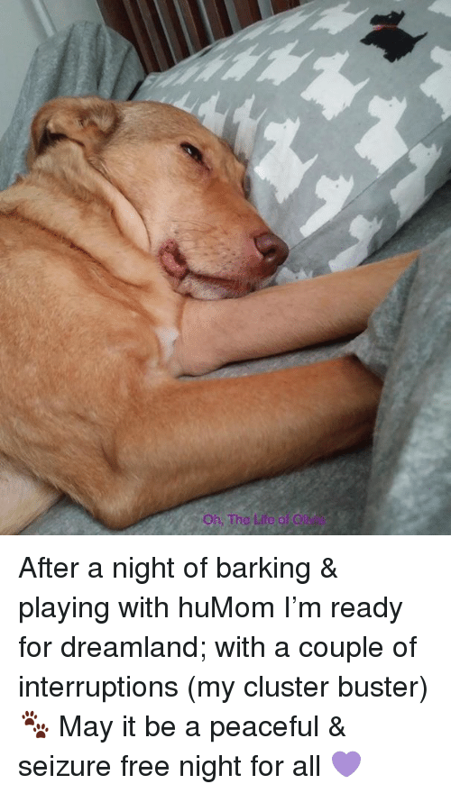 Life, Free, and Seizure: Oh. The Life of O After a night of barking & playing with huMom I'm ready for dreamland; with a couple of interruptions (my cluster buster)🐾 May it be a peaceful & seizure free night for all 💜